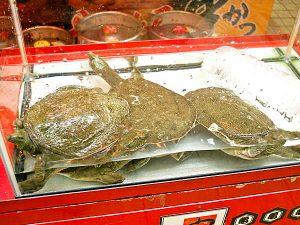 スッポン鍋(一人前)2,500円